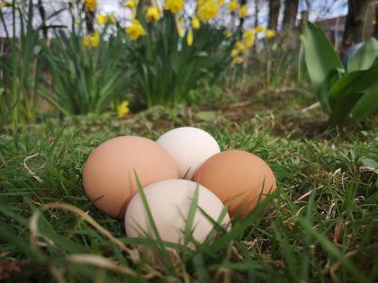OS Eggs