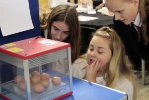 Egg hatch 2