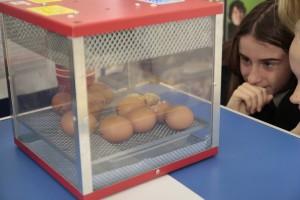 Egg hatch 3